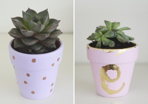 purple and pink plant pots