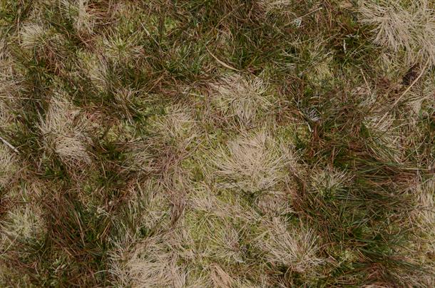 connemara moss 2