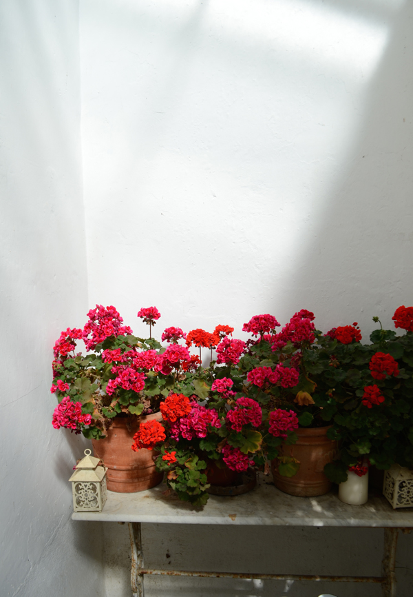 foraging_geraniums_carlow