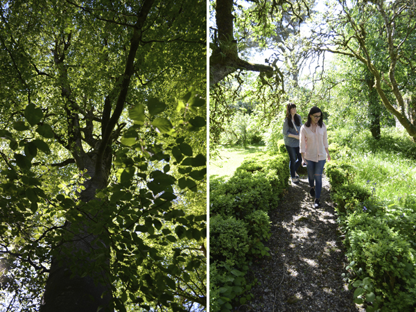 girls_foraging_trees_carlow