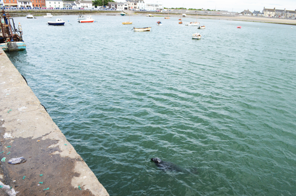 seal skerries