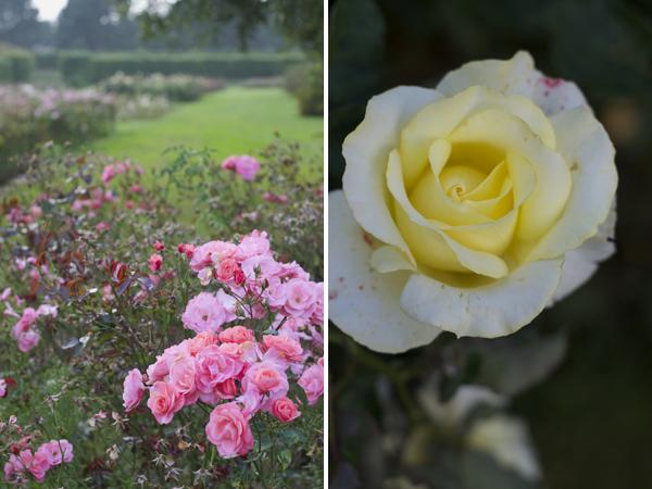 dublin_rose_garden