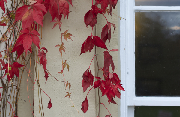 county_donegal_ireland_red_leaves