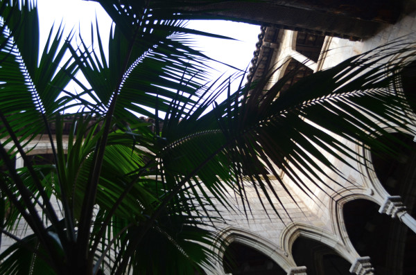 museo_picasso_palms_barcelona