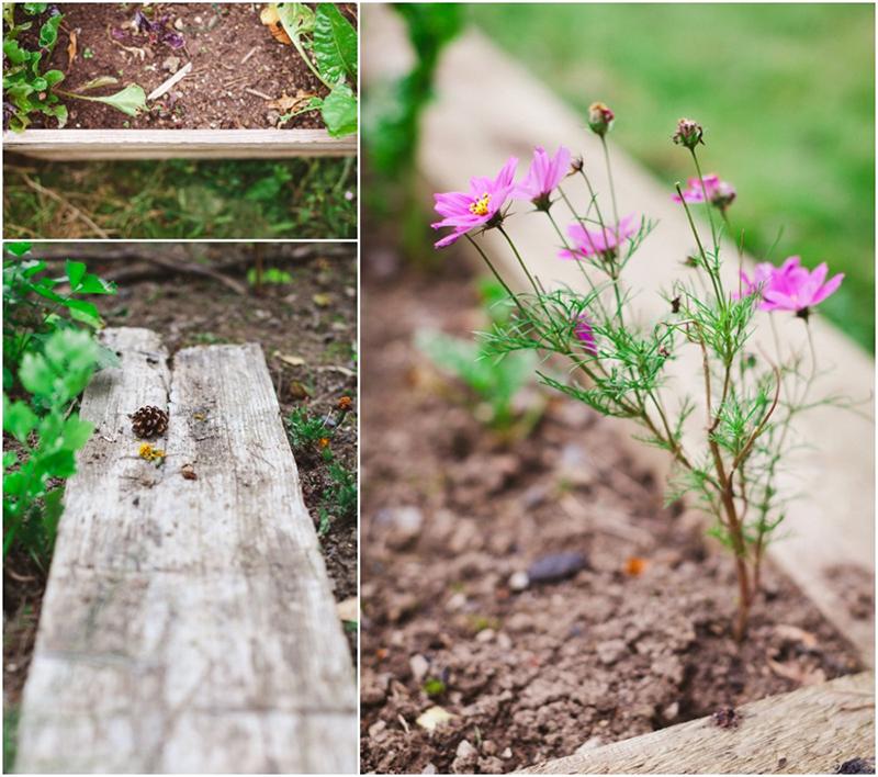 gardening-dublin-ireland-david-corscadden