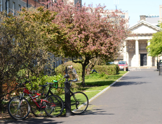 Trinity College blossoms in spring