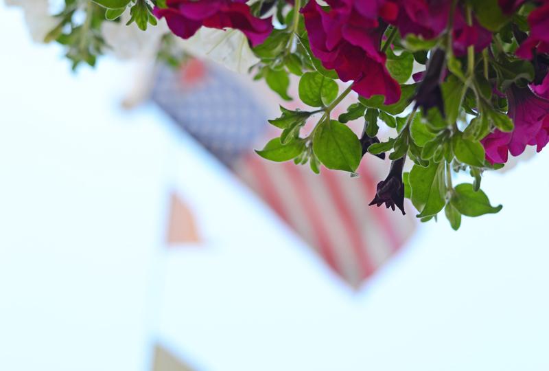 hanging-flowers-ireland-2