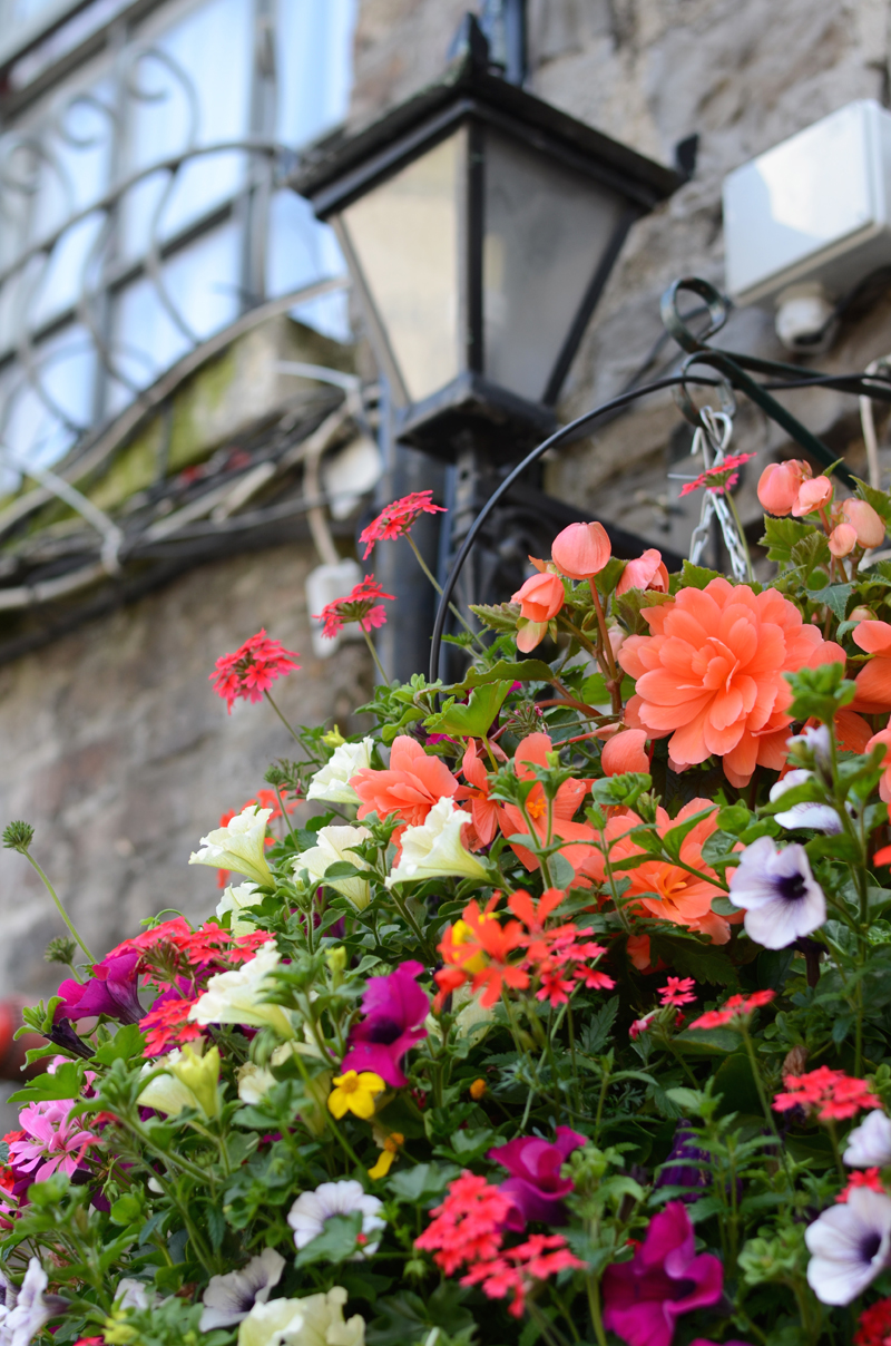lantern-flowers-dublin