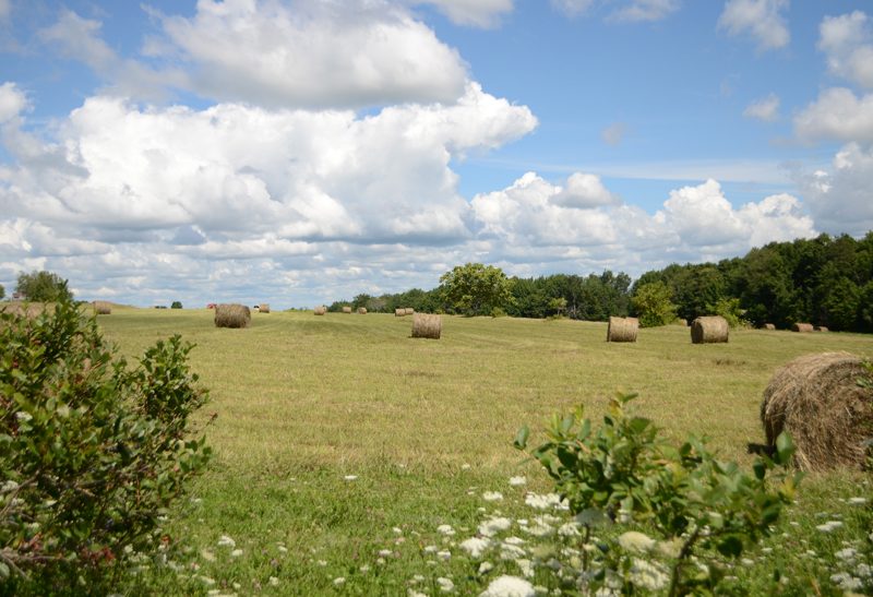 maine-farm-summer