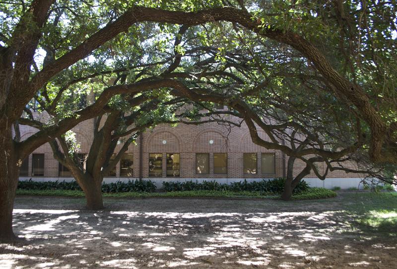 trees-rice-university