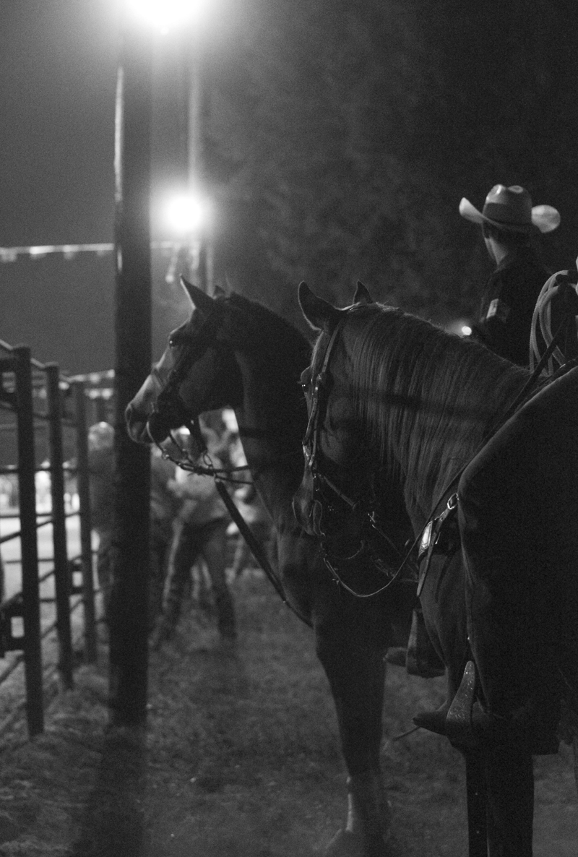 horse-rodeo-texas-san-jacinto