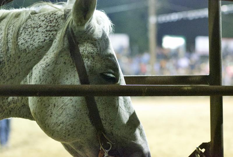 horse-rodeo-texas