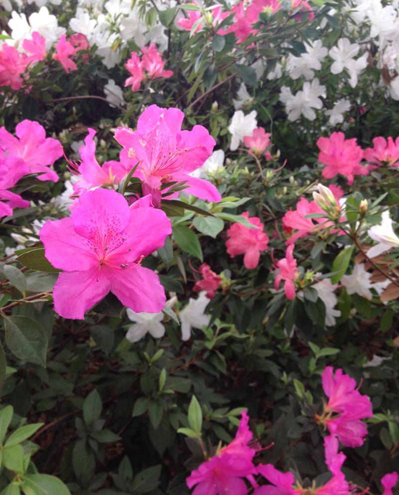 houston-spring-flowers
