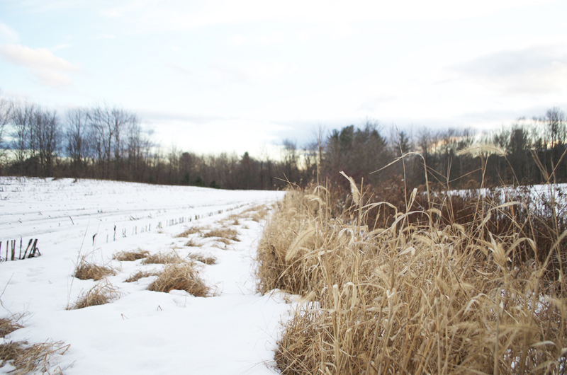 maine-snowy-field