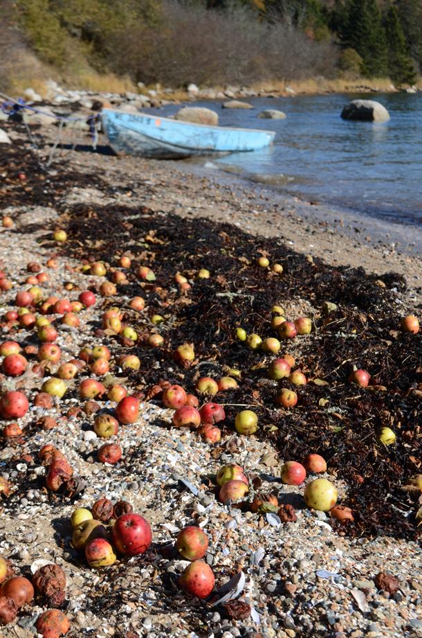 apples beach boat