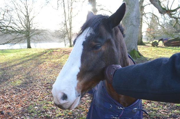 horse castle leslie